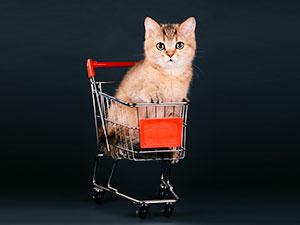 gestao-de-compras-diagnostico-rapido-facil-e-100-gratuito-blog