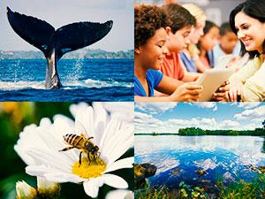 terceiro-setor-como-garantir-sustentabilidade-e-continuidade-blog